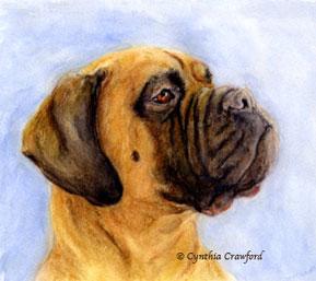 abby-mastiff