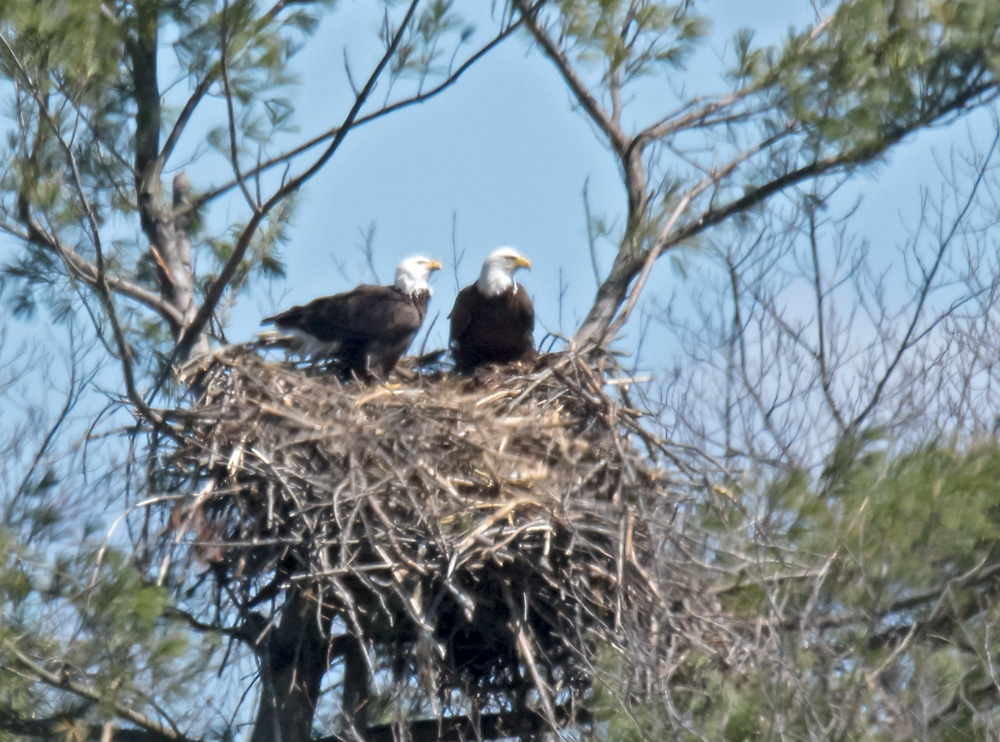 eagles 2 nest