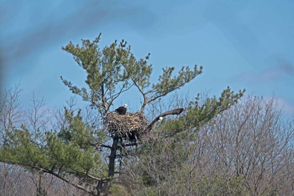 eagles nest full frame fly