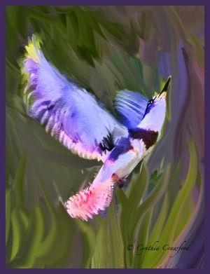 belted.kingfisher.flight.fancy.jpg