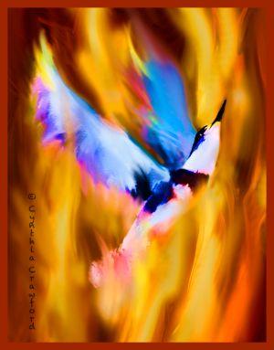 kingfisher.flight.phoenix2.jpg