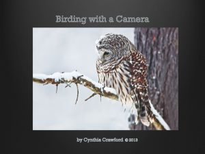 Barred Owl in a Sbowstorm