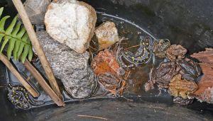 salamanders.frogs.toads_1230058.jpg