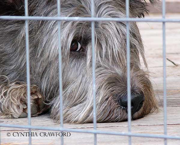 glen.imaal.fence.c.crawford