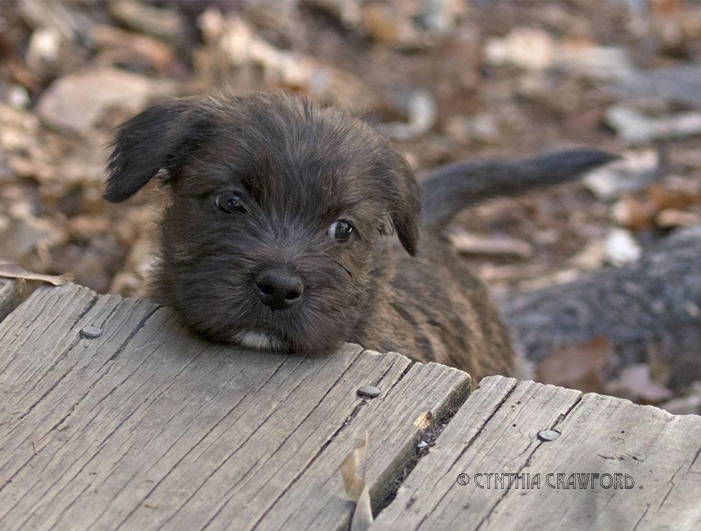 glen.pup.chin_O6A3312