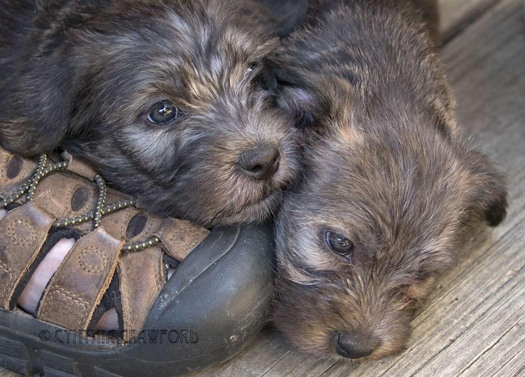 glen.pups2_O6A3317