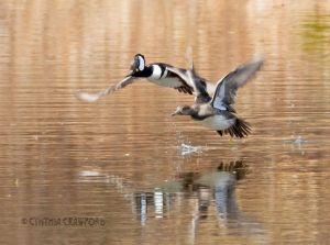 hoodies.flight.b.pond_5622.jpg
