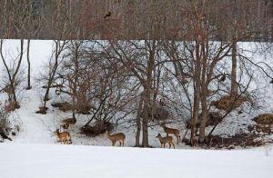 04.turkeys.deer_7881.jpg