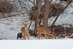 07.deer.turkey_7923.jpg
