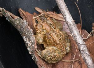 toad_1230077.jpg